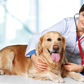 DOGS BEST FLEA TREATMENT